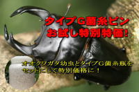 【特別価格】オオクワガタ幼虫+タイプG菌糸瓶_イメージ