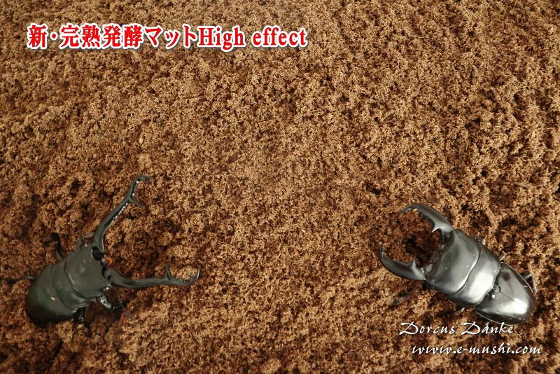 クワガタ採卵昆虫マット
