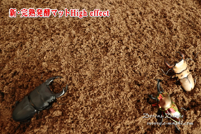 クワガタ産卵昆虫マット