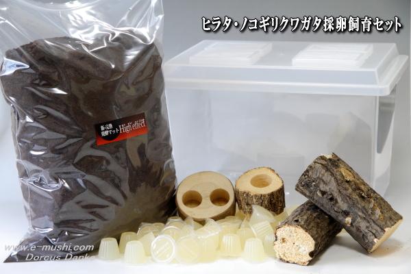 ヒラタ・ノコギリクワガタ採卵飼育セット_イメージ
