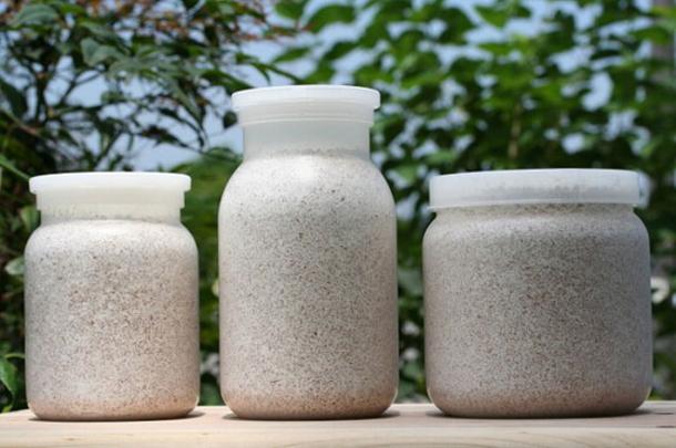【特別価格】オオクワガタ幼虫+タイプG菌糸瓶