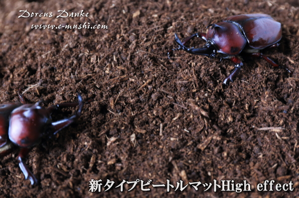 昆虫マット