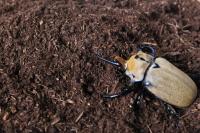 新タイプビートルマットHigh effect【カブト採卵から幼虫飼育用】(昆虫マット)_イメージ