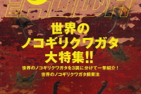 BE・KUWA(ビー・クワ)77号★飼育レコードコンテスト!!