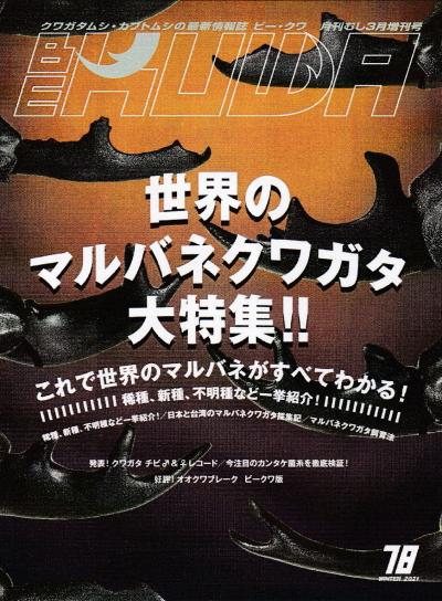 BE・KUWA(ビー・クワ)78号★世界のマルバネクワガタ大特集!!