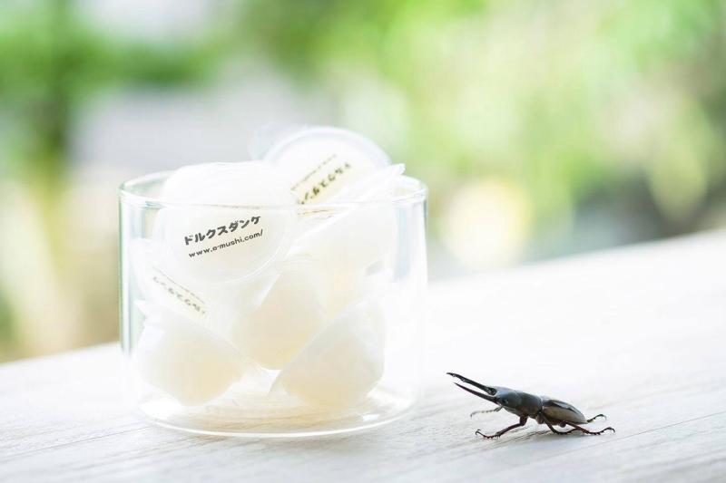 クワガタ、カブトムシの喜ぶ昆虫ゼリー