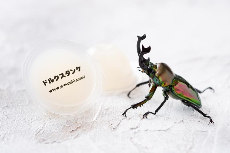 クワガタと昆虫ゼリー