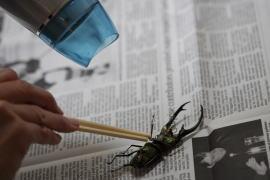 割り箸で体を固定。全体にドライヤーの弱温風を約10センチ程離して当てる。