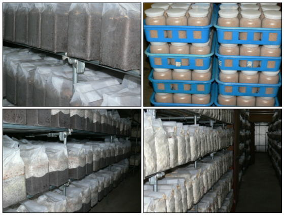 タイプG菌糸瓶 菌糸ビン 工場
