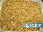 サンプル個体:国産オオクワガタ初心者飼育方法