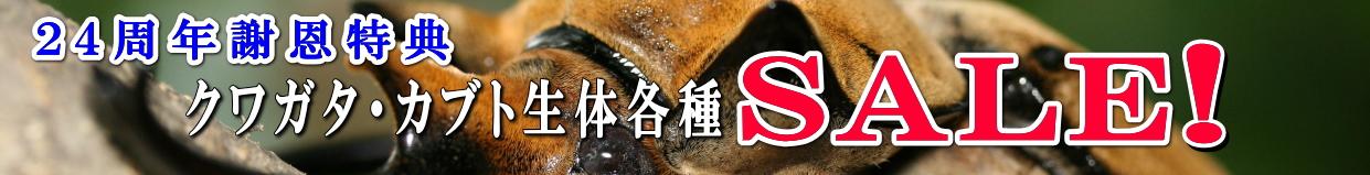クワガタ カブトムシ 周年セール